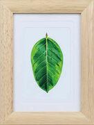 樹液を採集し終えたゴムの木を使用した、優しい風合いの写真立て「ゴムの木」発売