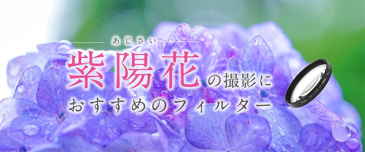 1200×500_ajisai_banner.jpg