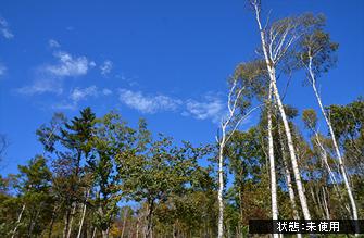 sirakaba_pl_wo_335.jpg