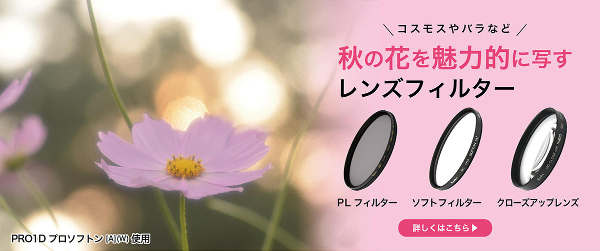 秋の花を魅力的に写すレンズフィルター