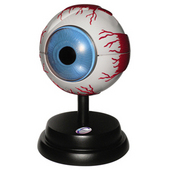 EASTCOLIGHT#29962  立体模型 眼球