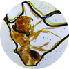 stv-012mp_ant.jpg
