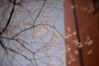 img:4月28日(土)レンズベビー散歩(レンズベビー貸出・無料イベントです)