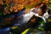 秋のおすすめフィルター PLフィルター<br/>~紅葉をもっと鮮やかに美しく写そう~