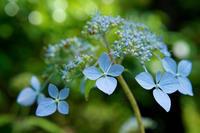 季節のおすすめフィルター ~紫陽花の撮影におすすめのフィルター~