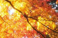 紅葉の撮影にオススメのフィルター