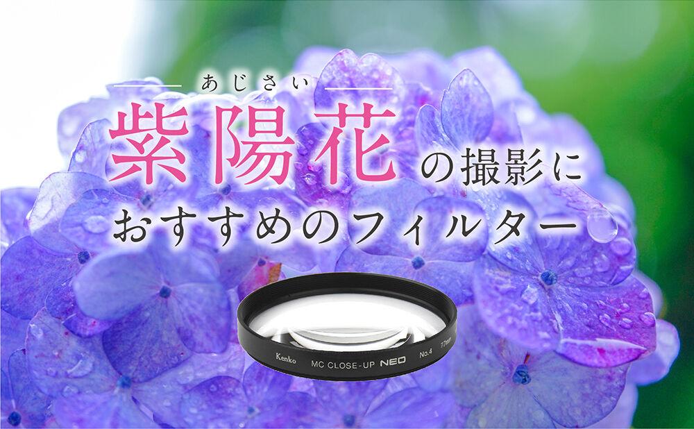 紫陽花の撮影におすすめのフィルター